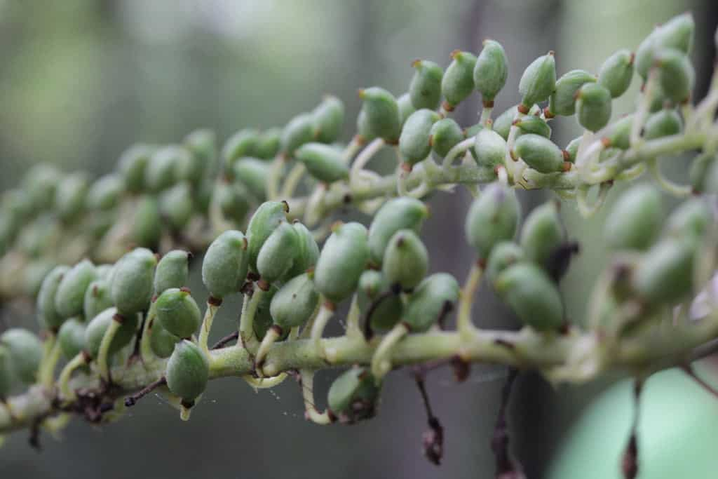 Ranking the best black cohosh of 2020